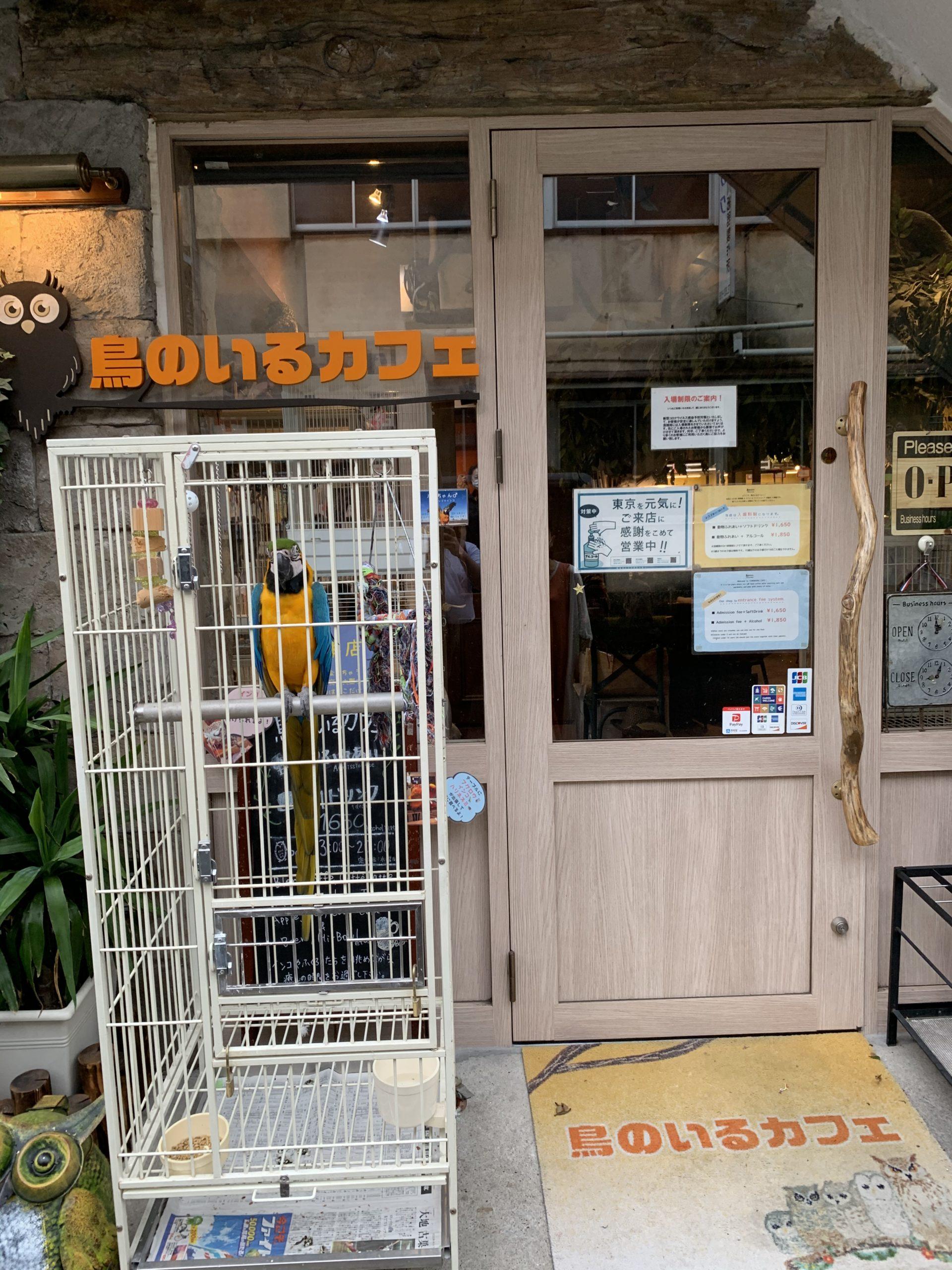鳥のいるカフェ谷中本店に行ってきました!