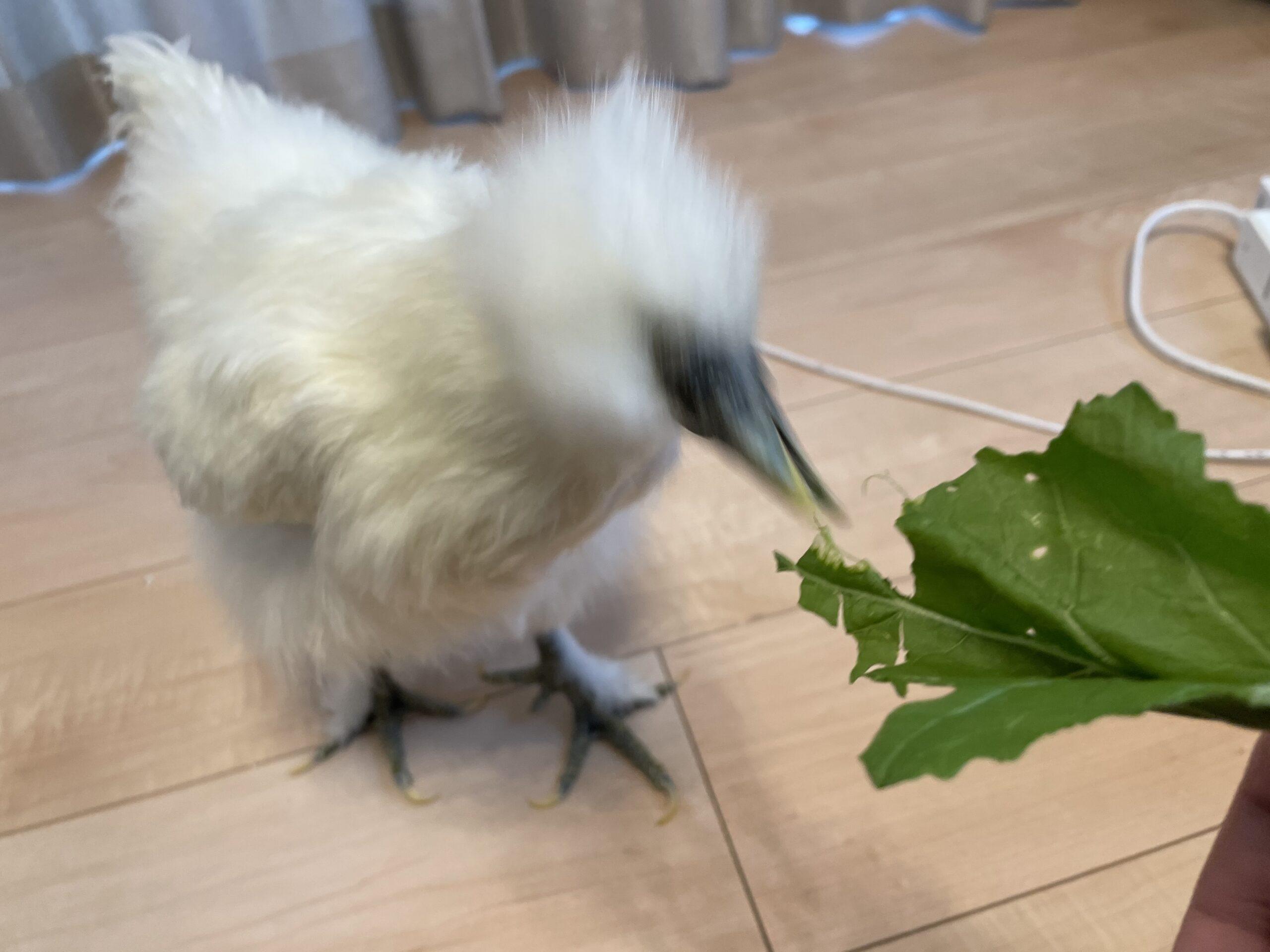 カブの葉っぱ美味しいね